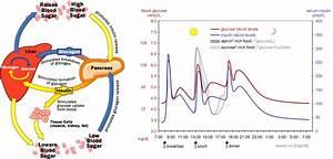 Homeostasis And Feedback  U00ab Kaiserscience