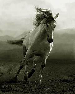 animal, black and white, horse, nature, photography ...
