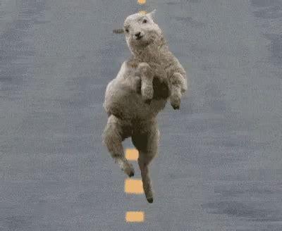 sheep gifs tenor