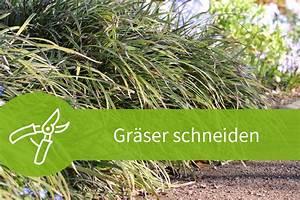 Pflanzen Schneiden Kalender : gr ser schneiden mit dem fr hjahrsschnitt zum erfolg ~ Orissabook.com Haus und Dekorationen