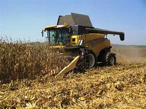 Corn Fields Harvest | www.pixshark.com - Images Galleries ...
