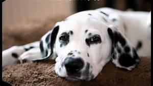 Los 10 Perros Mas Cari U00f1osos