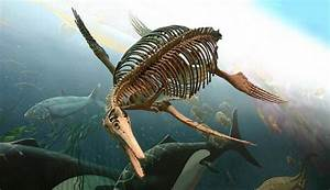 Ancient Sea Monsters: Misidentified Fossilized Skeletons ...