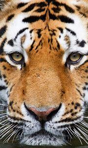 30 Lovable Animal Iphone 5 Wallpapers   Naldz Graphics