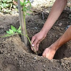 Planter Des Graines De Tomates : tag planter les tomates comptoir des jardiniers ~ Dailycaller-alerts.com Idées de Décoration