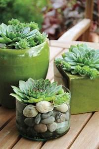 Sukkulenten Arten Bilder : 489 besten succulent bilder auf pinterest sukkulenten ~ Lizthompson.info Haus und Dekorationen