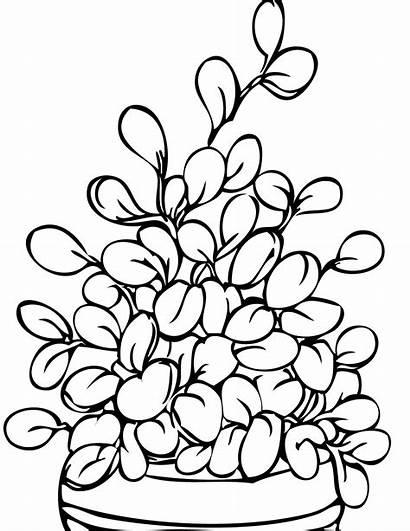 Pintar Plantas Colorear Dibujos Planta Imprimir Flores