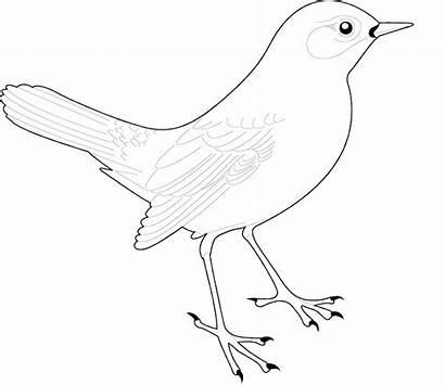 Coloring Birds Dot Bird Drawing Printable Preschoolers