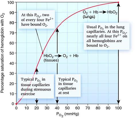The human oxygen hemoglobin dissociation curve.   Biology Forums Gallery