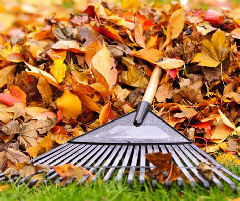Herbst Gartenarbeit by Bord Na M 243 Na Horticulture Top Tips For Autumn Gardening