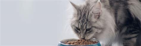 die vorteile von trockenfutter fuer katzen purina