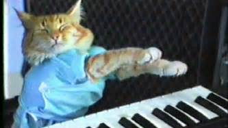 piano cat weekend events soul singer judith hill performs in