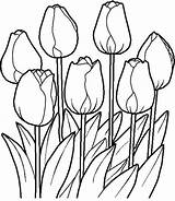 Flower Bed Drawing Coloring Garden Getdrawings sketch template