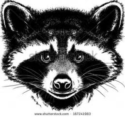 Black and White Face Raccoon