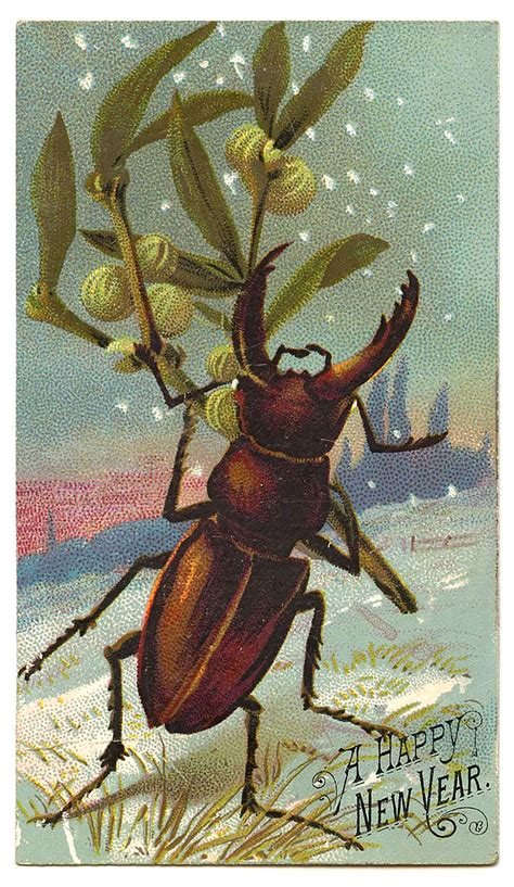 antique graphic  year beetle  graphics fairy