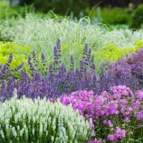 tips for low maintenance flower gardening thriftyfun