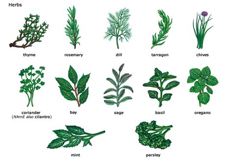 herbs plants pictures herbs plants