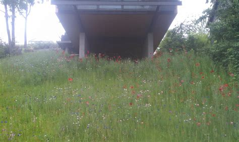 hydroseed reviews hydroseed hillside with wildflower meadow mix low maintenance yelp