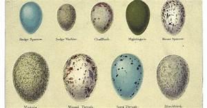 Bird Identifier Chart Bird In Everything Birds Eggs Pictures