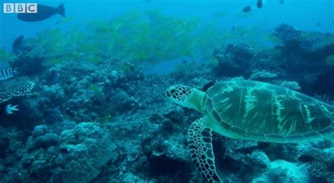 sea turtle gifs find share  giphy