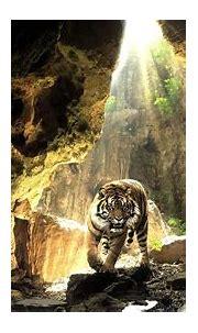 Cave Tiger | Full HD Desktop Wallpapers 1080p