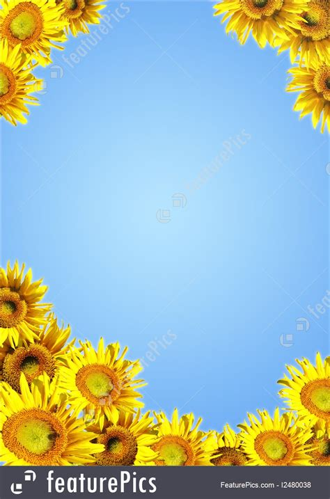 sunflowers picture
