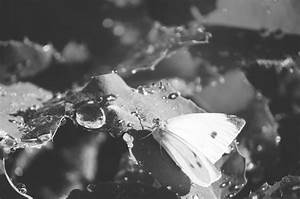 Black and White Butterfly   Photography   Inspiration ...