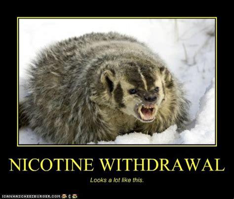 nicotine withdrawal cheezburger funny memes funny