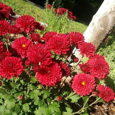 Herbst Gartenblumen by 5 Gartenblumen Die Auch Im Herbst Herrlich Weiterbl 252 Hen