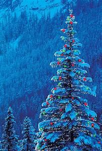 outdoor, christmas, tree, photograph, by, darwin, wiggett