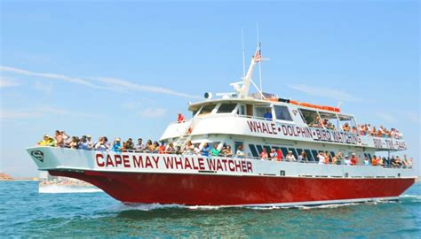 Cape May Boat Rentals by Cape May Whale Watcher Activities In Cape May