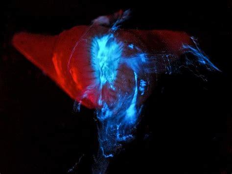 rockin  world glowing deep sea creatures