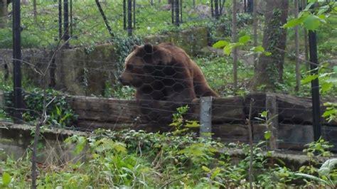 ingresso zoo di pistoia zoo di pistoia italy