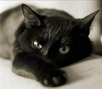 Բրիտանուհուն վերադարձրել են տասներեք տարի առաջ կորած կատվին