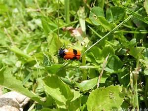 Ameisen Mit Flügel : ameisen sackk fer kr uterklatsch ~ Buech-reservation.com Haus und Dekorationen