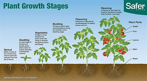 Learn The Six Plant Growth Stages