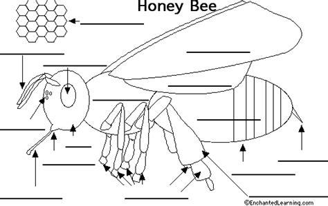 label  bee printout enchantedlearningcom