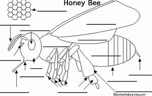 Bee Diagram Without Labels