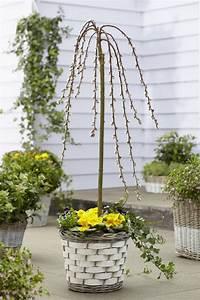 Balkon Bäume Im Topf : sal weide k tzchen weide garten garten pflanzen und garten pflanzen ~ Frokenaadalensverden.com Haus und Dekorationen