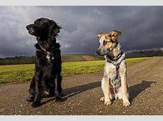 Maxx & Lucca zwei Hunde mischen die Familie auf