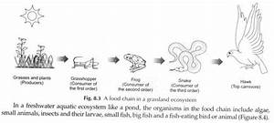 Food Chain In Ecosystem  Explained With Diagrams