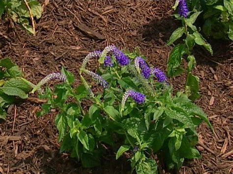 perennial border plants for sun perennials that love sun diy