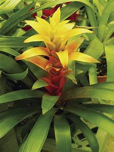 Care Instructions For A Bromeliad Plant