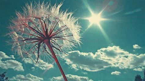 happy sun  hd wallpapers  desktop hd wallpaper
