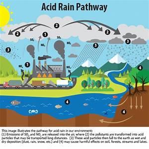Acid Rain | Adirondack Council