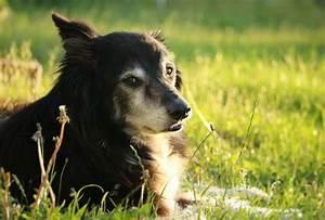 Schneckenkorn Giftig Für Hunde : xylitol ist gef hrlich f r hunde vergiftung durch xylit ~ Lizthompson.info Haus und Dekorationen