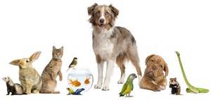 Image result for pet sitting
