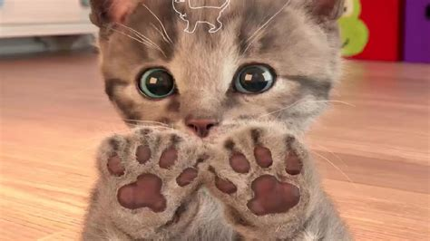 My Favorite Cat Little Kitten Pet Care