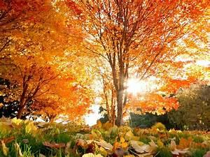 Orange Autumn Trees & Sunlight wallpapers | Orange Autumn ...