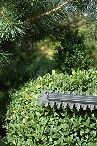 Welches öl Für Holztisch : heckenschere pflegen welches heckenschere pflege l ist das richtige ~ Sanjose-hotels-ca.com Haus und Dekorationen